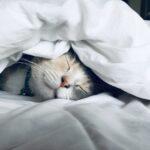 ¿Como has dormido hoy?